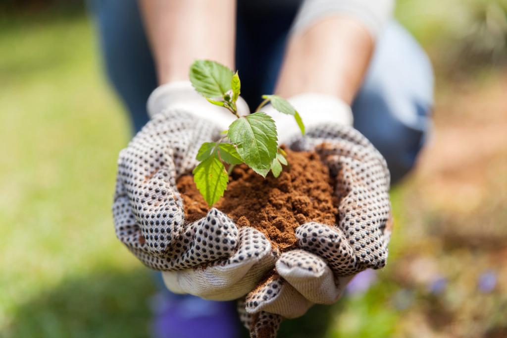 close up of hands in gloves with soil and a plant