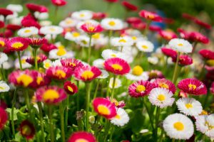 6 Reasons to Love Your Flower Garden