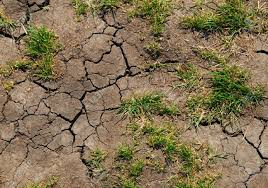 The Consequence of The Worlds Soil is Drying Out