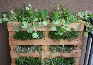A pallet made into a vertical planting area to create a garden out of the structure