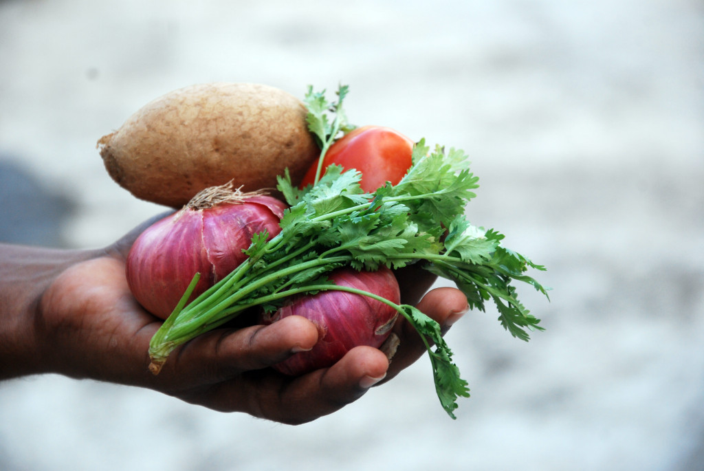 An image showing a hand holding some winter vegetables that have been grown